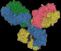 Antibody IgG1 surface.png