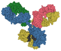 Surface model of an antibody at the molecular level