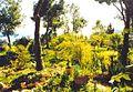 Antiguo jardín en Villa Argentina - panoramio.jpg