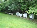 Apiary at the edge of the wood - geograph.org.uk - 870950.jpg