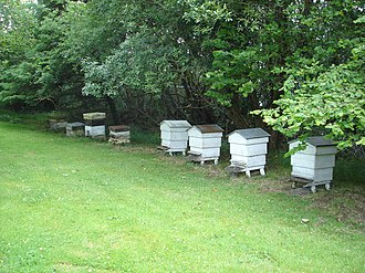 Glossary of Dorset dialect words - Bee-pots