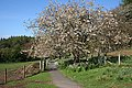 Approaching Arduaine Gardens - geograph.org.uk - 1273474.jpg