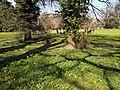 Arboretum Zürich 2012-03-23 13-54-33 (P7000).JPG