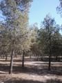 Arbre au Parc Sidi Mâafa.png