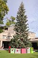 Arizona Biltmore Christmas Tree.jpg