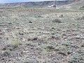 Artemisia pedatifida — Matt Lavin 006.jpg