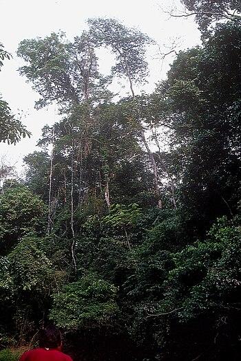 Artenreicher Regenwald Madre de Dios