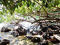 As pedras de Ilha Grande.JPG