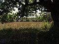 Ash Moor - geograph.org.uk - 577235.jpg