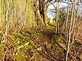 Attenborough Nature Reserve Path - geograph.org.uk - 1126899.jpg