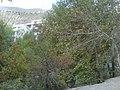 Autumn 2008 - panoramio.jpg