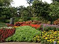 Autumn flowers in Roma Street Parkland 052013 521.jpg