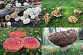 Autumn is the time for nice mushrooms in their full glory - panoramio.jpg