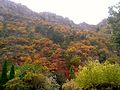 Autumn mountain foliage in dalian (2).jpg