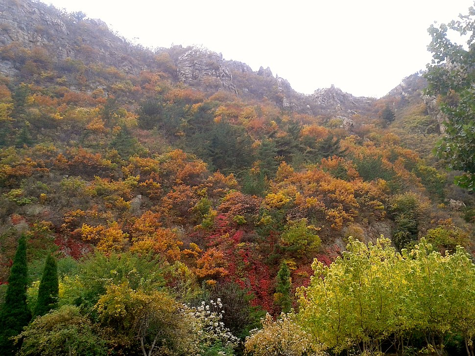 Autumn mountain foliage in dalian (2)