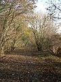Avenue of trees - near Ridge Farm - geograph.org.uk - 89643.jpg