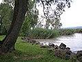 Balaton - panoramio (7).jpg