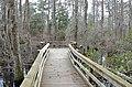 Bald Cypress Trail First Landing State Park-boardwalk-spanish moss-3 (32393627763).jpg