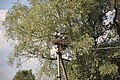 Baltā stārķa ligzda Nr.3010, Mālpils, Mālpils pagasts, Mālpils novads, Latvia - panoramio (1).jpg