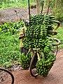 Banana Bike, Uganda (16369787520).jpg
