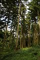 Barham Hill road Elham Valley Way Covert Wood in Barham Kent England 2.jpg