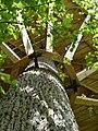 Baumhaus Tragwerk mit Hilfe von speziellen Baumschrauben im Baum befestigt.jpg
