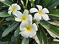 Beautiful White Fowers.jpg