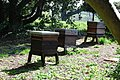 Beehives at Saltram - geograph.org.uk - 1247263.jpg