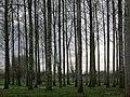 Beemden Alken - panoramio.jpg