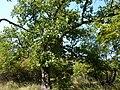 Beglik Tash - surrounding forest - P1020628.JPG