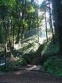 Belle-Isle-en-Terre. Penn-Dreo. Escalier.jpg