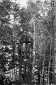 Beobachtungsposten im Wald - CH-BAR - 3236823.tif