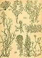 Bericht des Naturwissenschaftlichen Vereins für Schwaben und Neuburg (a.V.) in Augsburg (1908) (20371932181).jpg