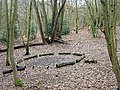 Bestwood Country Park - campfire site - geograph.org.uk - 657922.jpg