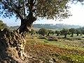 Bethlehem by Mujaddara - panoramio (3263).jpg