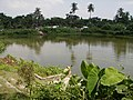 Big Pond - Manosapota Village - Simurali 2011-10-05 050343.JPG