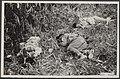Bijschrift Gesneuvelde Japanners, vrijwilligers der T.R.I...., Bestanddeelnr 069-0552.jpg