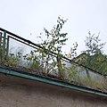 Birch in eaves.jpg