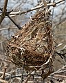 Bird's Nest - Guelph, Ontario 2020-04-11 (01).jpg