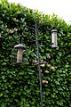 Bird feeders in Nuthurst West Sussex England.jpg