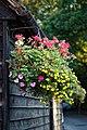 Black Horse Inn hanging basket at Nuthurst West Sussex England 01.jpg