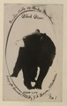 Black bear No 1 (HS85-10-39851) original.tif