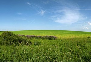 Vologda Oblast - Hills in Vologda Oblast. Northwest of the city of Vologda, close to the selo of Molochnoye.