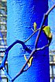 Blue Tree Close UP with Leaf Dimopoulos.jpeg