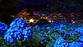 Blue hydrangea in Unsho-ji, Oga at night 20190703c.jpg