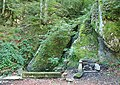 Bosc de la Comtessa 2011 01.jpg
