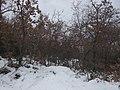 Bosco presso Santo Stefano sotto la neve - panoramio.jpg