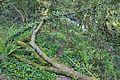 Bosque - Bertamirans - Rio Sar - 005.JPG