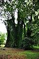 Botanic garden limbe11.jpg