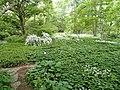 Botanischer Garten Freiburg - DSC06367.jpg